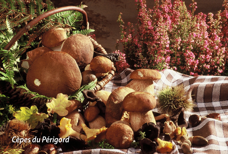 cepes-perigord