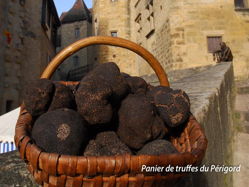 truffes-perigord